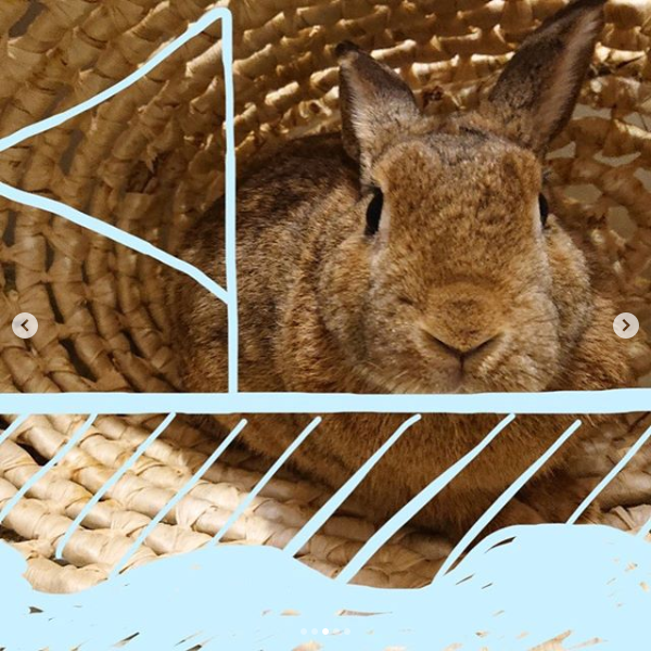 Screenshot_2020-03-23 ペッツクラブ( pets club rabbit) • Instagram写真と動画(3)