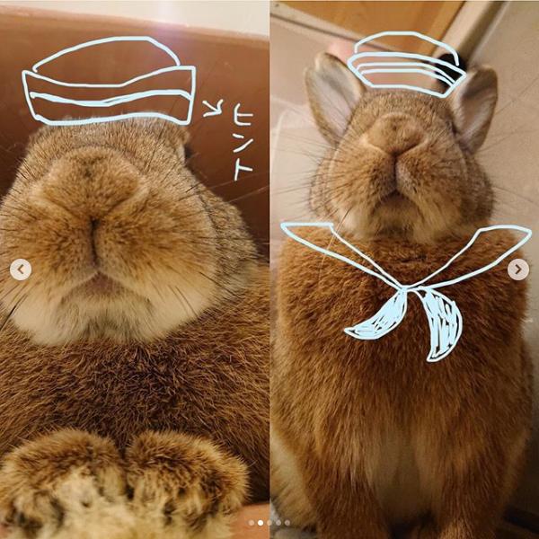 Screenshot_2020-03-23 ペッツクラブ( pets club rabbit) • Instagram写真と動画(2)
