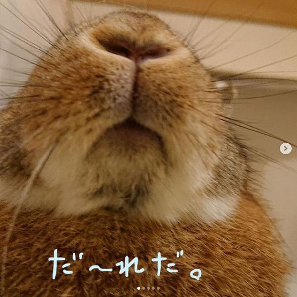Screenshot_2020-03-23 ペッツクラブ( pets club rabbit) • Instagram写真と動画(1)