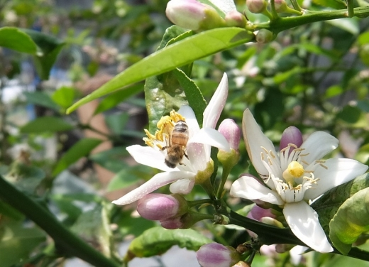 20200507_04蜜蜂