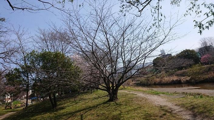 202103春石手川公園 (3)