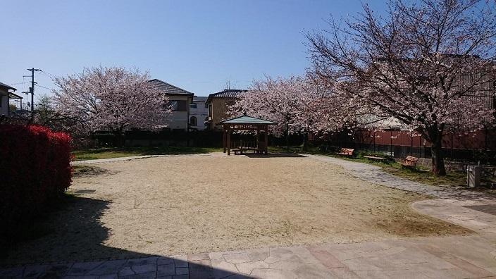 202104桜咲く (1)