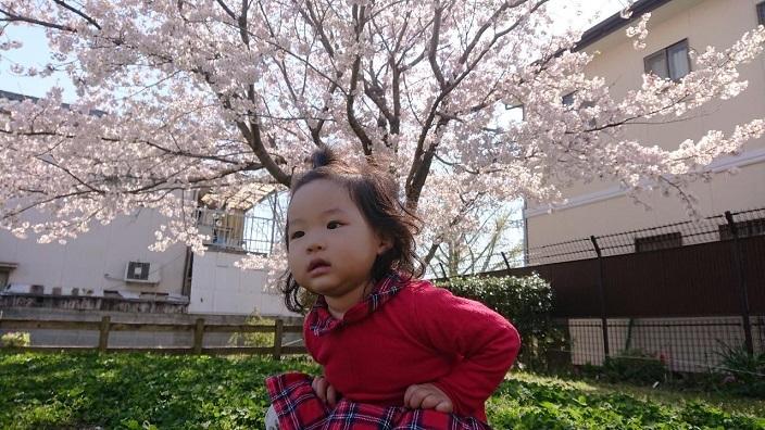 202104桜咲く (2)