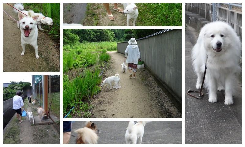 200704散歩mz