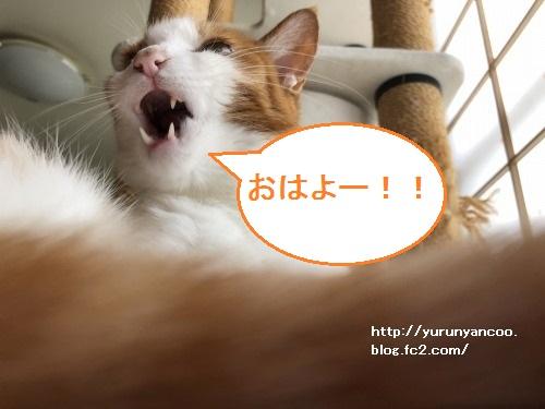 ブログNo.1833目覚めの瞬間(18日~21日)2