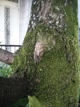木に置いた蝉
