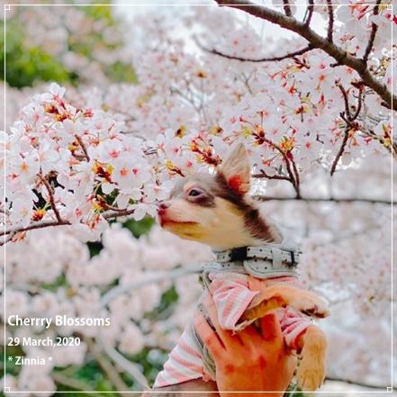 お散歩~☆2