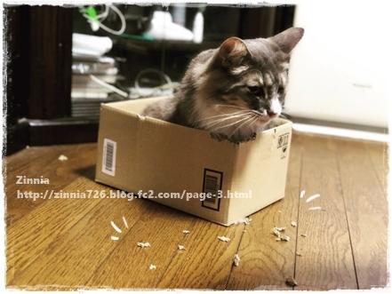 ダンボール箱を破壊したのは・・・1