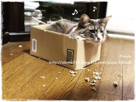 ダンボール箱を破壊したのは・・・2