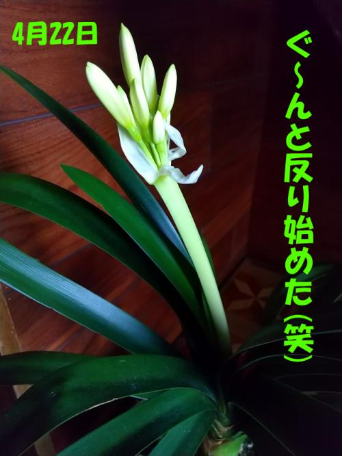 2020kunshiran5.jpg